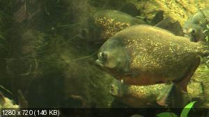 Aquarium Impressionen (2010) BDRip 720p