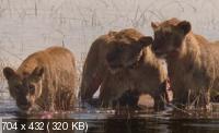 Плавающие львы / Swimming Lions (2002) DVDRip