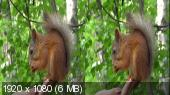 3D Клипы о природе в 3D Горизонтальная анаморфная