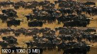 Национальный парк Серенгети 3D / Serengeti 3D (2011) BDRip 1080p