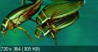 Сфера колдовства / La cle des champs (2011) BD Remux + BDRip 1080p / 720p + HDRip 1400/700 Mb